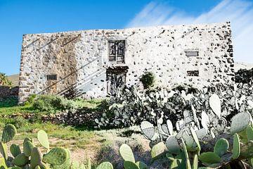 Kaktus-Haus von Haaije Bruinsma Fotografie
