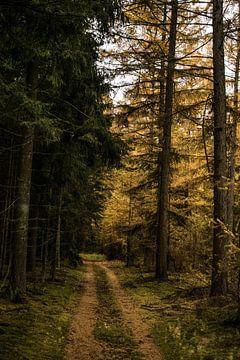 Herfst Wandeling van Robert Snoek