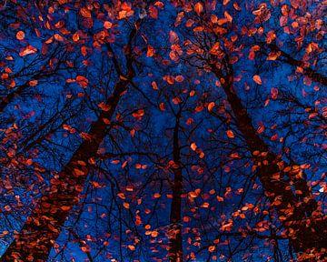 Platos Bäume II von Lars van de Goor