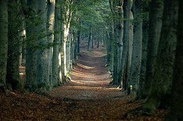 Natuur, zon weerschijn bospad Amerongen van Rob Jansen