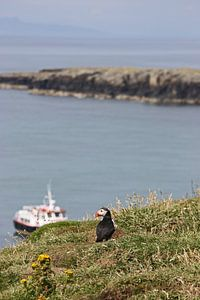"[impressions of scotland] - puffin ""Fernweh"""