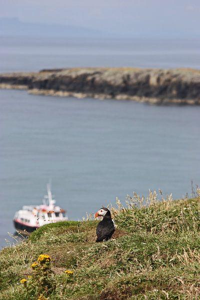 "[impressions of scotland] - puffin ""Fernweh"" van Meleah Fotografie"