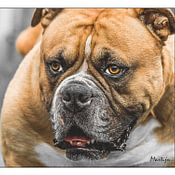 Martijn . profielfoto