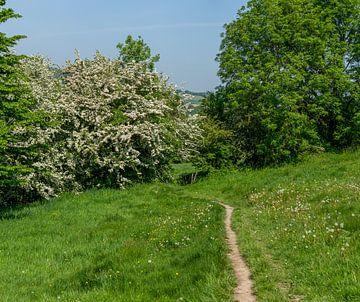 Verborgen wandelpaadje in Zuid-Limburg van John Kreukniet