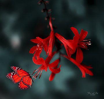 Vlinder op een Montbretia (Crocosmia Luzifer)