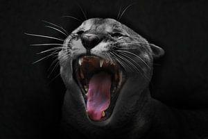 Der Schrei der Katze. Der Kopf eines Pumas ist in Nahaufnahme mit einem offenen roten Maul zu sehen, von Michael Semenov