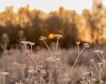 Sonnenaufgang Nachtfrost von Michael van der Tas