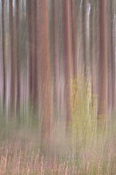 Bewegende bomen op de Veluwe van Dirk-Jan Steehouwer