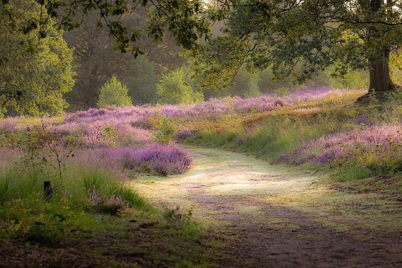 Gehen auf der Heide
