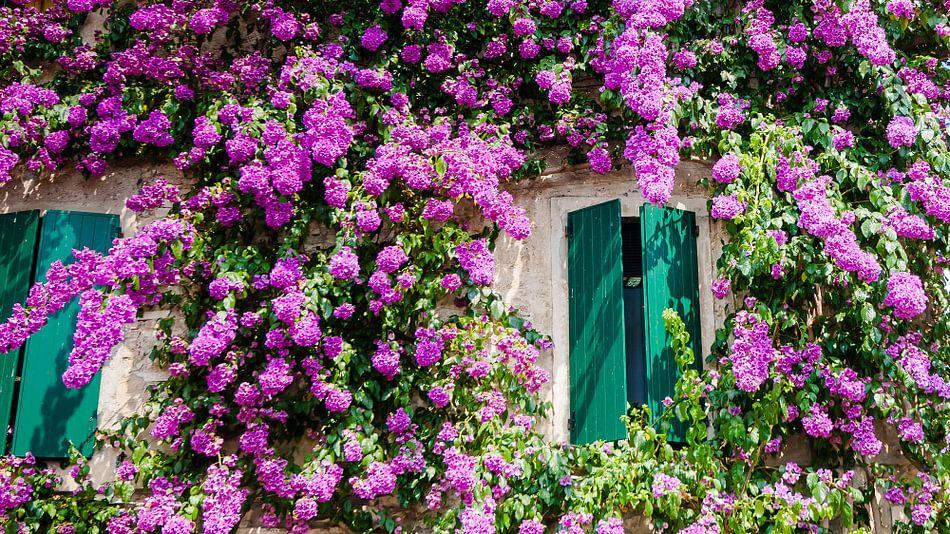 Villea Met Klimplanten Vol Bloemen Aan De Gevel Van