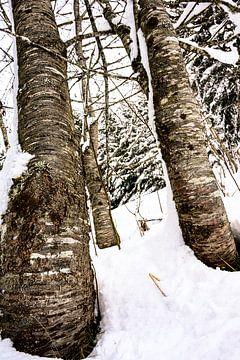Verschneite Bäume von Wouter van Woensel
