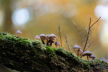 Pilze am Baumstamm von Tania Perneel