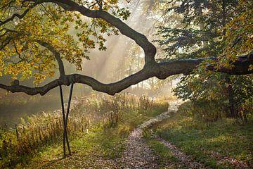 Bospad in de herfst sur Michel van Kooten