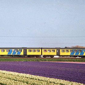 Train à travers les champs de bulbes I Chemins de fer néerlandais I Hillegom, Noord-Holland I Photog sur Floris Trapman