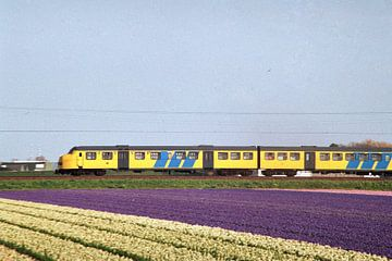 Train à travers les champs de bulbes I Chemins de fer néerlandais I Hillegom, Noord-Holland I Photog
