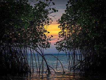 Mangroven-Sonnenuntergang von Rik Pijnenburg