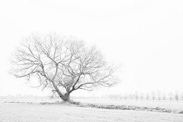 High Key Minimalistische Winterlandschaft mit Weiden und Baumreihen von Lucia Leemans