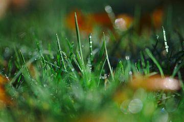 Groen als gras van Geert Jan Klinkhamer