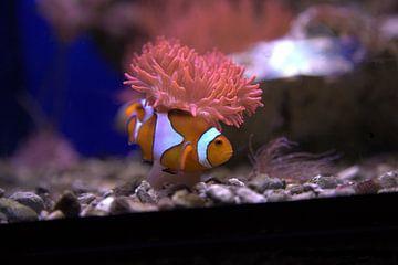 Vissen von Fred Roland