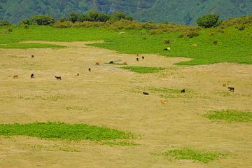Weide met koeien von Michel van Kooten