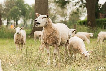 Schafe auf der Wiese von Kyra de Putter