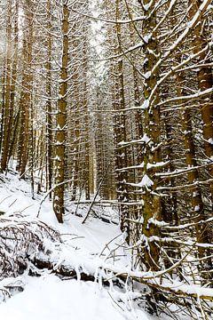 Besneeuwd bos van Wouter van Woensel