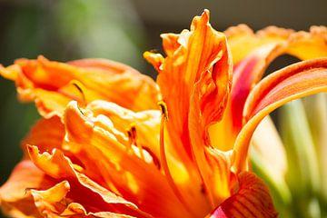 Oranje bloem van Suzanne de Jong