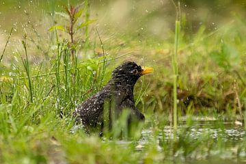 Merel neemt een bad na een fikse regenbui van Bart Vermeiren