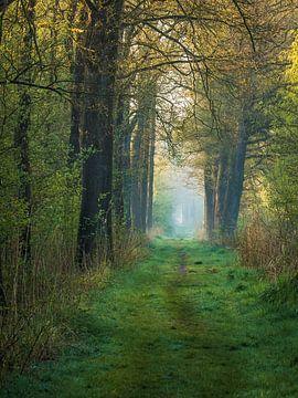Waldweg III von Diane van Veen