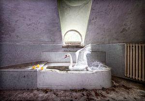 Zwaan in bad oude villa van Marcel van Balken