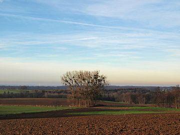Bomen met maretak in akker von Rinke Velds