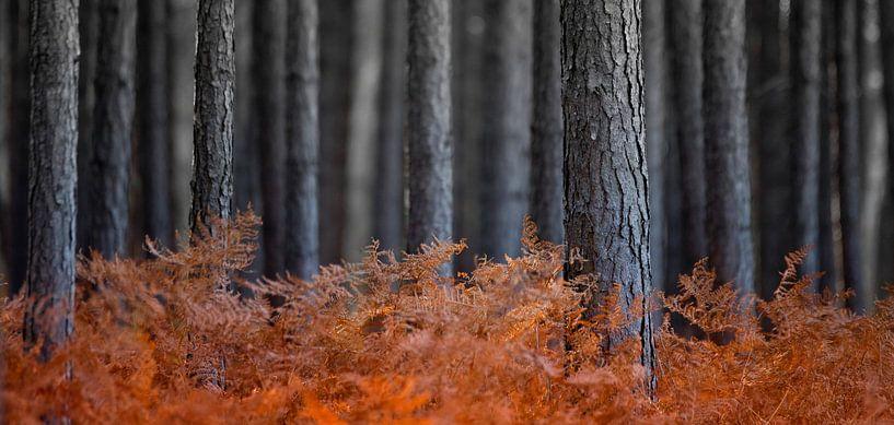 Varens in bos van Sam Mannaerts Natuurfotografie