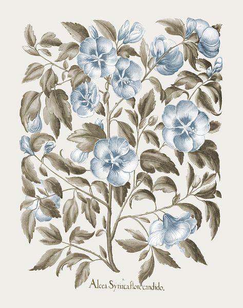 Basilikum Besler-weiße Rose von Sharon von finemasterpiece