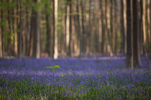 Haller forest von Paul Oosterlaak