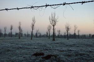 Bomen in de kou van