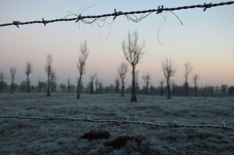 Bomen in de kou van Fraukje Vonk
