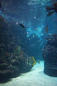 Unterwasser-Welt 5 von Carin Klabbers