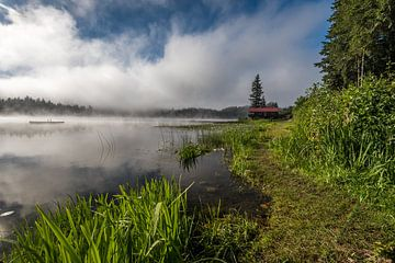 Een mistige morgen aan turtle lake Canada van Eelke Brandsma