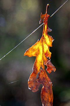 Just hanging around... :) von Dennis Claessens