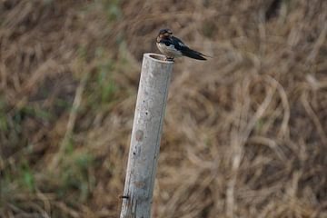 vogel op paal van Bart Cornelis de Groot