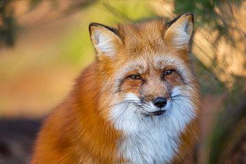 Fox sur Dennis Eckert