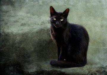 zwarte dame van Claudia Moeckel