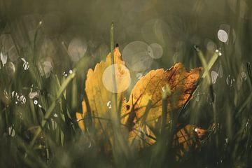 bokeh herfst part 1 van Tania Perneel
