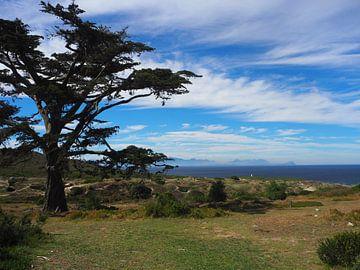 Baum Südafrika von Sanne Bakker