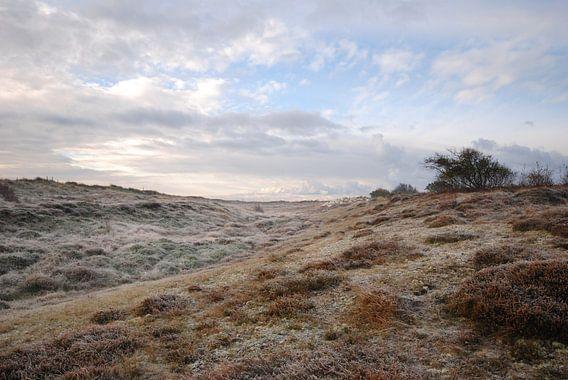 Schaapjes in de duinen van Margreet Frowijn