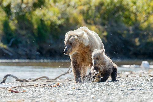 Grizzly beer en haar jong van Menno Schaefer