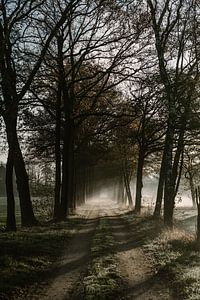 Herfst ochtend in Nederland