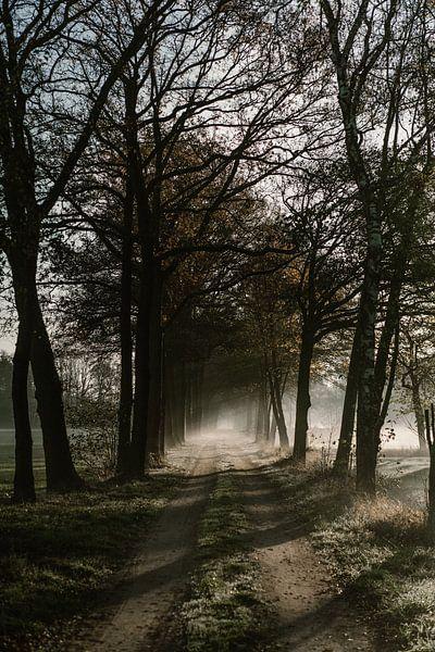 Herfst ochtend in Nederland van Wianda Bongen