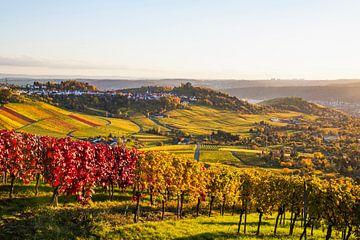 Wijnbouw in Stuttgart van Werner Dieterich