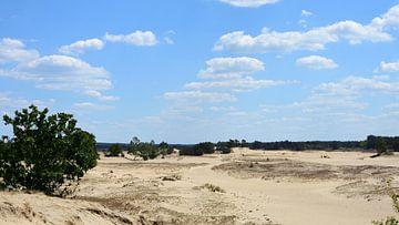 Blick über eine Sandverwehung von Gerard de Zwaan
